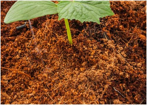 Coco Peat: The proven way to conserve water in your garden