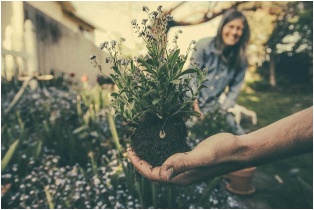 Rhizobacteria – the best friends your garden needs