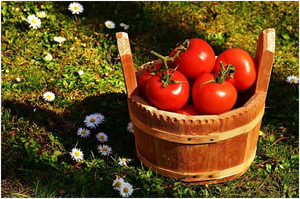 3 vegetables you can easily grow in your organic garden